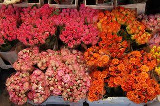 Roses à l'étal d'un fleuriste un 31 décembre à Nice