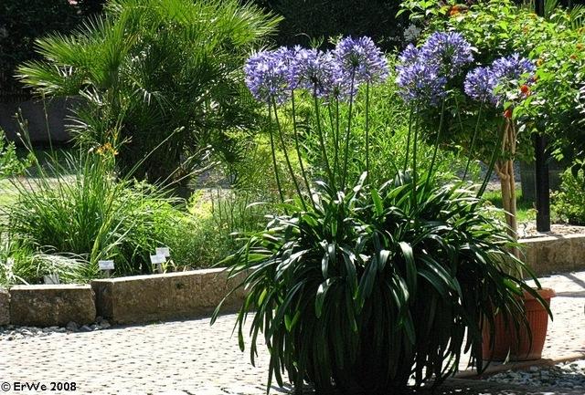 Un jardin bleu pour les vacances for Arbuste en pot pour terrasse