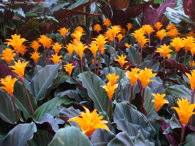 Plantes d 39 int rieur pour l 39 ombre for Plantes qui poussent a l ombre