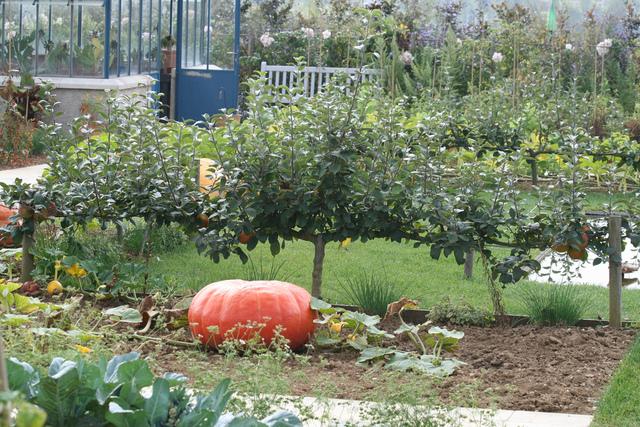 Exceptionnel Quel Arbre Dans Mon Jardin #4: Haie-fruitiers-palmette-potager.jpg