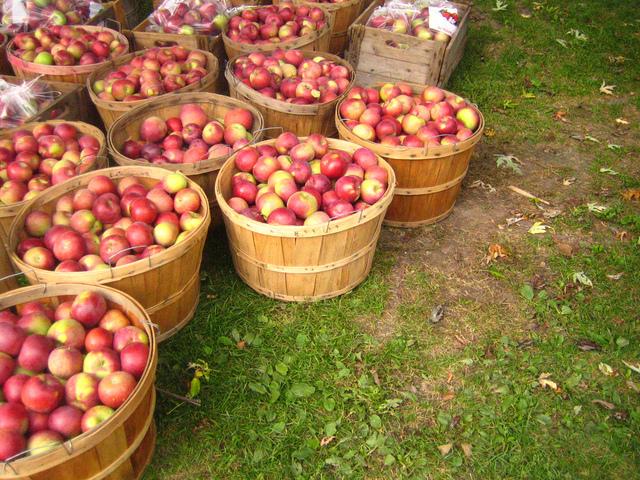 Guide des différentes variétés de pommiers et de pommes