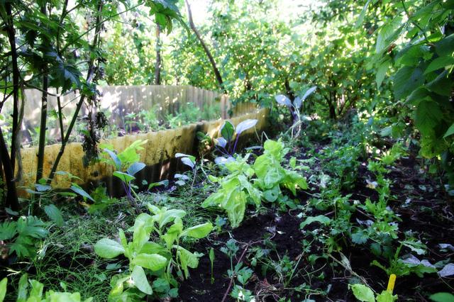 Un arbre au potager entre jardin for t et agroforesterie for Jardin foret