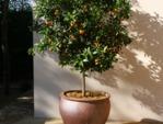 Les arbres fruitiers - fiches pratiques