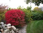 Une haie aux couleurs d'automne