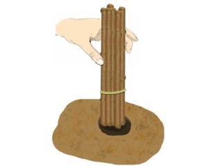 Boutures de bois dormant : mise en terre