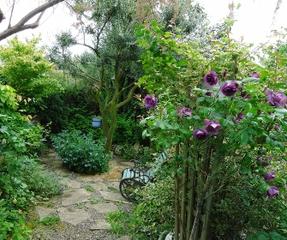 abondance petit jardin trait plan d 39 eau tout. Black Bedroom Furniture Sets. Home Design Ideas