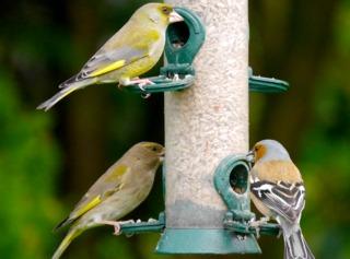 Saurez-vous identifier ces oiseaux du jardin ? / Smabs Sputzer
