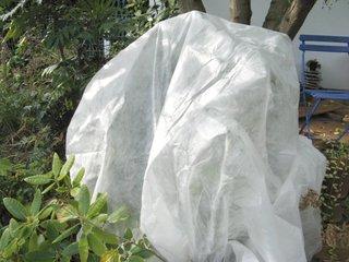 Plante du jardin protégée par un voile d'hivernage