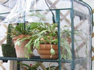Plantes frileuses