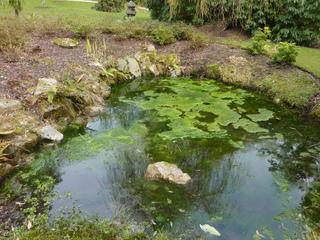 Prolifération d'algue indésirable