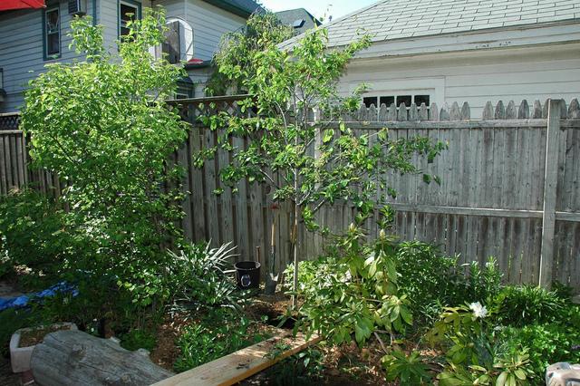 Jardin de ville conseils de 28 images 5 conseils pour for Conseil plantation jardin