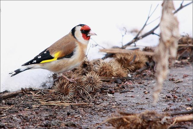 Les oiseaux du jardin savoir les identifier les observer - Distributeur de graines pour oiseaux ...