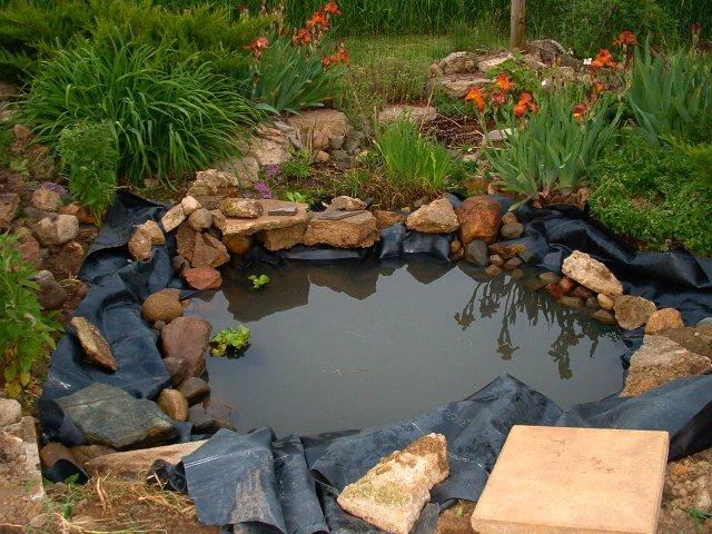 Restauration d 39 une mare nettoyage r parations plantes aquatiques - Bassin canard bache ...
