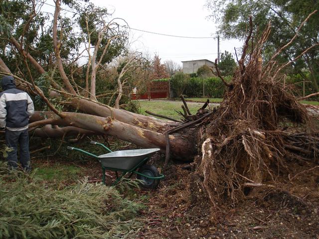 Tempête : pluie, grêle, vent, orages... comment protéger le jardin