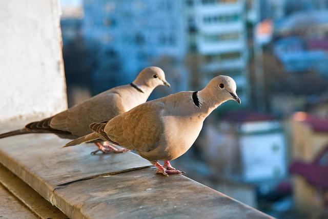 les oiseaux du jardin savoir les identifier les observer. Black Bedroom Furniture Sets. Home Design Ideas