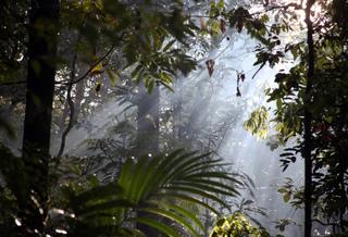 Forêt amazonienne : une flore encore mal connue