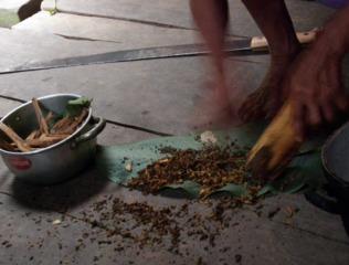 Préparation thérapeutique à base de plantes amazoniennes