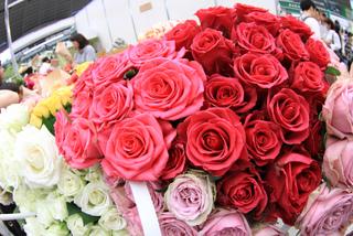 Roses de fleuriste
