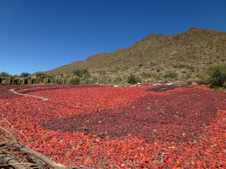 Séchage de poivrons - Elaboration du paprika