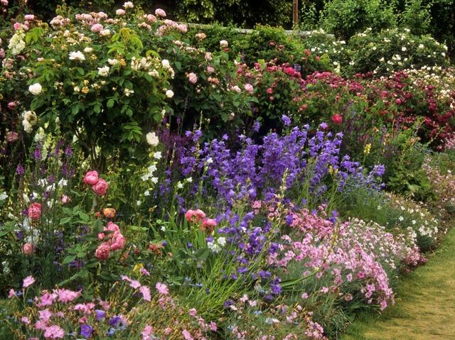 Roses, campanules et oeillets rivalisent de générosité dans ce massif...