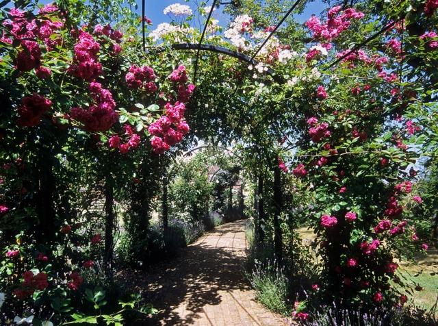 les rayons du soleil jouent entre les branches du saule pleureur cr er un jardin romantique. Black Bedroom Furniture Sets. Home Design Ideas