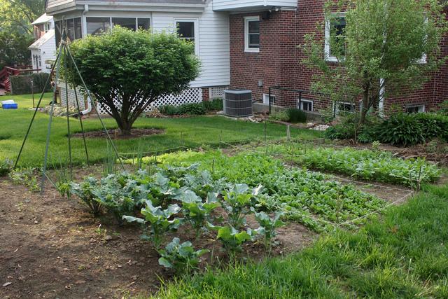 Un Petit Potager Quels L Gumes Cultiver Quelle Surface