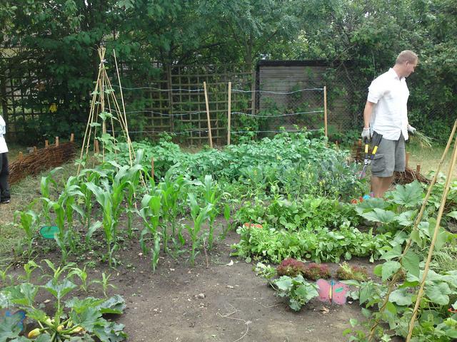 Un potager sans entretien quelles plantes astuces de for Petit jardin sans entretien