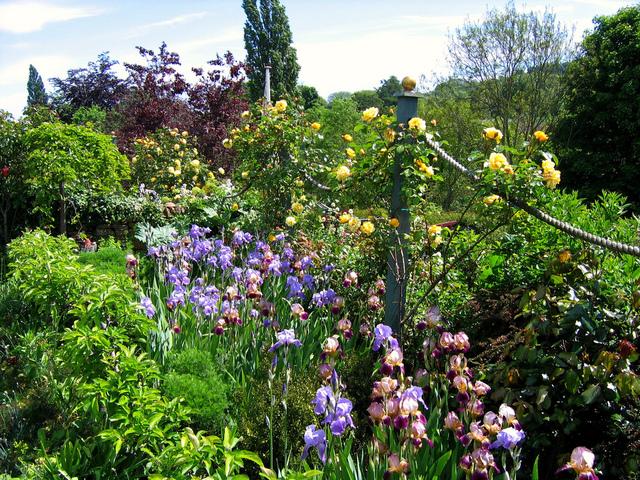 Violet et jaune sur un écrin de verdure (Créer un jardin romantique)