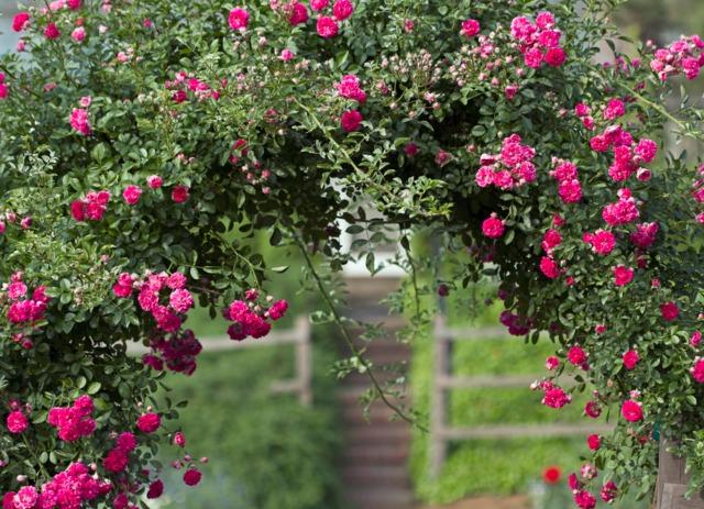 Au-delà de cette arche de roses, que cache le jardin ? (Créer un jardin romantique)