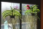 Entretien des plantes épiphytes