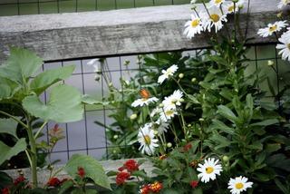 Clôture en grillage habillée de plantes à fleurs