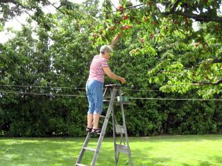 Escabeau pour la cueillette des cerises