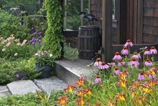 Hemerocallis 'Autumn Red' et Echinacea
