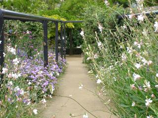 Jardin bleu et blanc