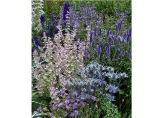 Jardin dans une symphonie de bleu