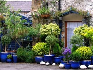 Jardin bleu illuminé par des arbustes panachés et dorés