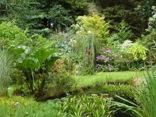 La mare du jardin de Kernévez en été