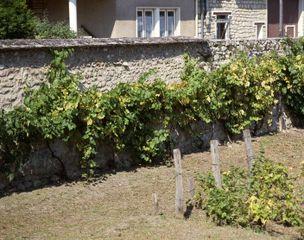 Mur de clôture d'un jardin de ville