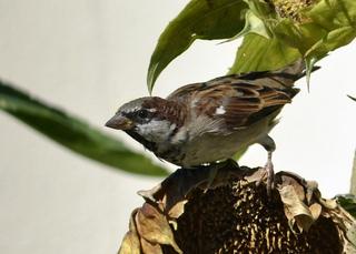 le jardin un garde manger pour les oiseaux en hiver. Black Bedroom Furniture Sets. Home Design Ideas