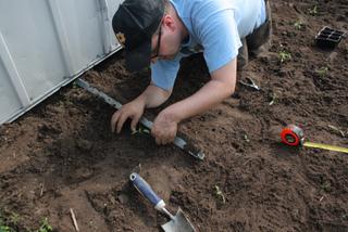 Repiquage de très jeunes plants de poivron