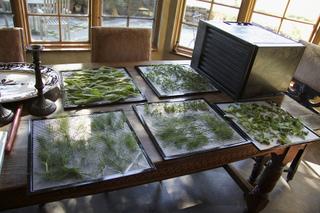 Séchoir pour plantes aromatiques