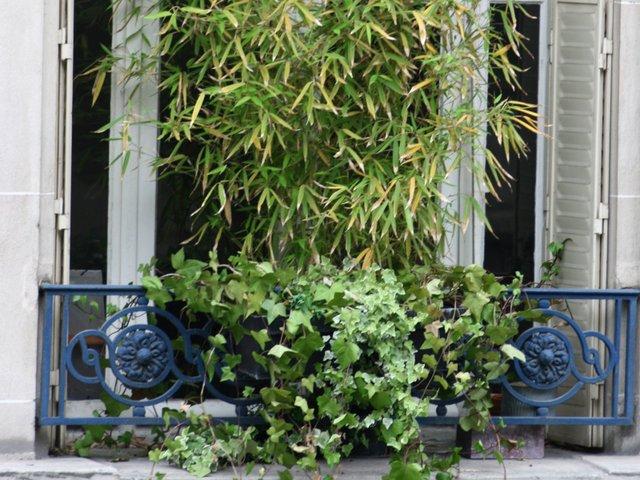 Planter des bambous en jardinire amazing plantation duune haie de bambou with planter des - Planter bambou en pot ...