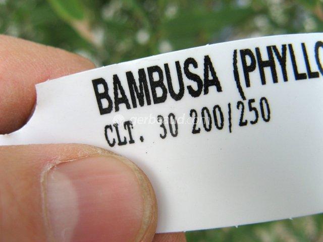 Bambou : conseils d'achat. Bien acheter.