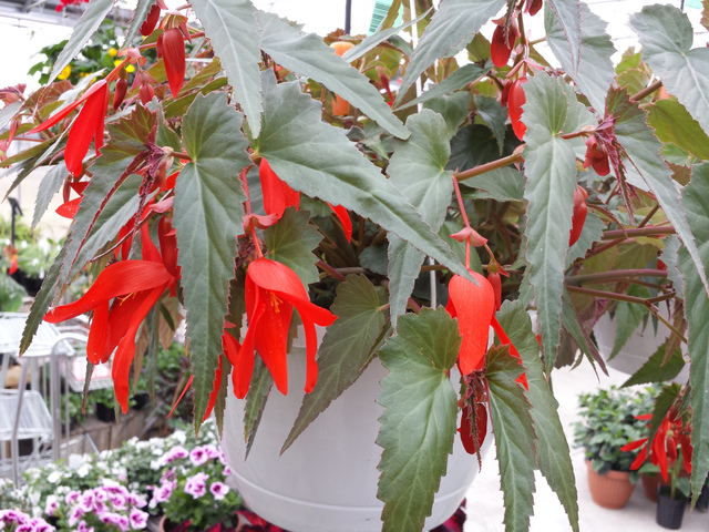 fleurir un balcon l 39 ombre conseils et s lection de plantes. Black Bedroom Furniture Sets. Home Design Ideas