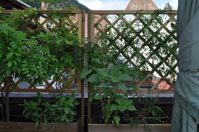 Id es jardin pour le printemps les grimpantes - Support pour plantes exterieur ...