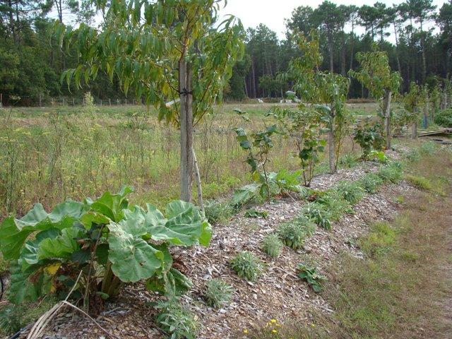 Planter une haie de fruits choix des arbres et arbustes for Tarif taille de haie au noir