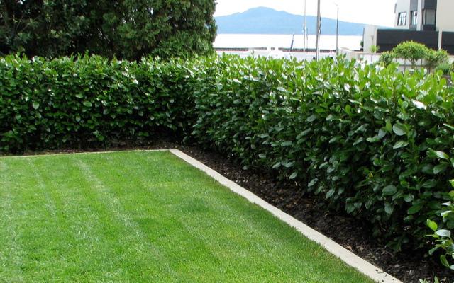 Haie pour petit ou grand jardin