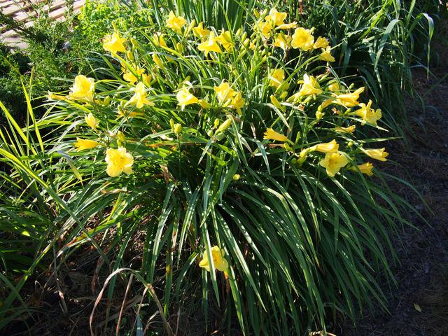 H 233 M 233 Rocalles Des Fleurs Faciles 224 Vivre