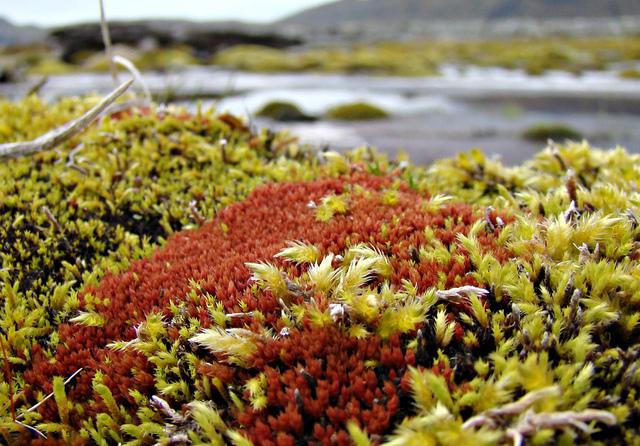 Tapis de mousses colorées (Mousses et lichens)