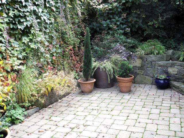 Id es jardin pour le printemps les grimpantes for Ecran de jardin belgique